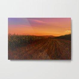 cornfield at sunset Metal Print