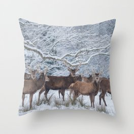 Red deers  from wintry Killarney National Park Throw Pillow