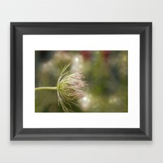 Queen anne's lace 02 Framed Art Print