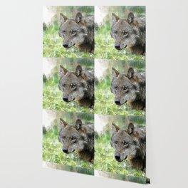 Wolf20151201 Wallpaper