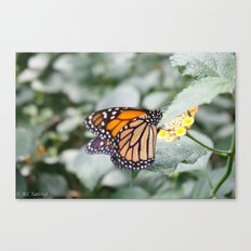 A Moment Canvas Print