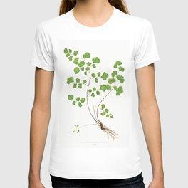 Edward Joseph Lowe - Adiantum Capillus–Veneris T-shirt
