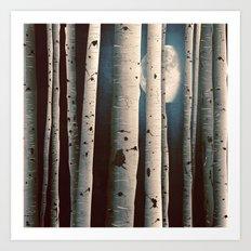 Birch wood at night Art Print