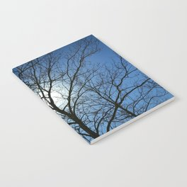 sycamores in the winter Notebook