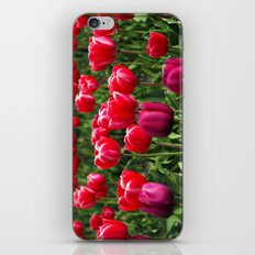 Tulip Love iPhone & iPod Skin