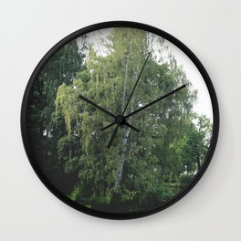 Large white birch on the shore of a reservoir with a dangling leaf crone Wall Clock