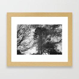Depth of Nature Framed Art Print