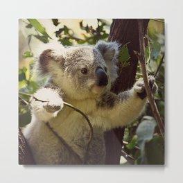 Sweet Koala Baby Metal Print