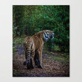A Tigers Roar Canvas Print