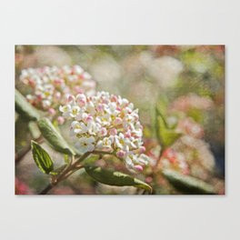 Vintage Inspired Pink and White Woodland Flowers with French Script Canvas Print