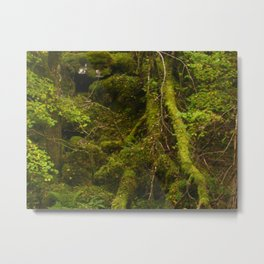 Fairaig Forest Metal Print