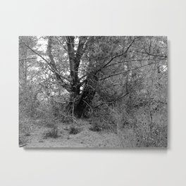 EDLF 004 Metal Print