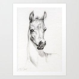 Arabian Horse Foal Portrait Graphite pencil drawing Equine illustration Art Print