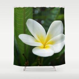 Naturally Frangipani Flower Shower Curtain