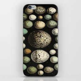 Naturalist Eggs iPhone Skin