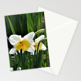 Daffodils in Morning Sun Stationery Cards