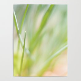 Dreamy  Herbs Chives Poster