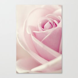 Close-up view of beatiful pink rose Canvas Print