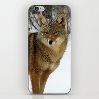 coyote iPhone & iPod Skins featuring Coyote by tracy-Me