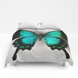 Papilio L  Comforters