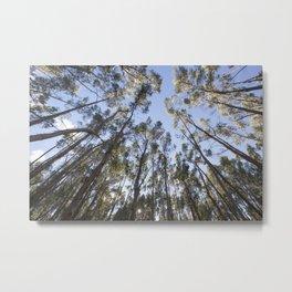 Eucalyptus Tree Metal Print