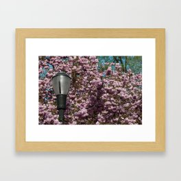 Blossoms and a Lamp Post Framed Art Print