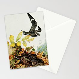Vintage Print - Nighthawk & Whippoorwill, from Birds of New York (1914) Stationery Cards