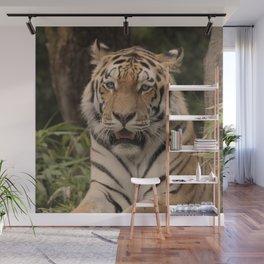 Tiger 0215 Wall Mural