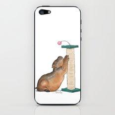 HippoCat at His Post iPhone & iPod Skin