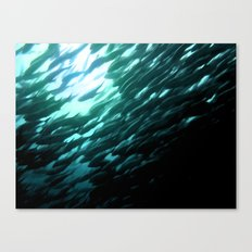 Thousands of jack fish Canvas Print