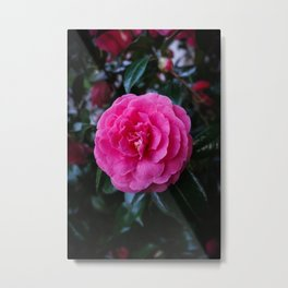 Comely Camellia Metal Print
