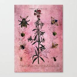 Vintage Bees with Toadflax Botanical illustration collage Canvas Print