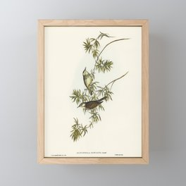 Fasciated Honey-eater (Glyciphila fasciata) illustrated by Elizabeth Gould (1804–1841) for John Goul Framed Mini Art Print