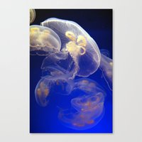 jelly fish Canvas Prints featuring Jelly Fish by Shannon McCullough-Wight