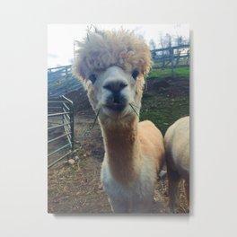 Alpaca Smiles Metal Print