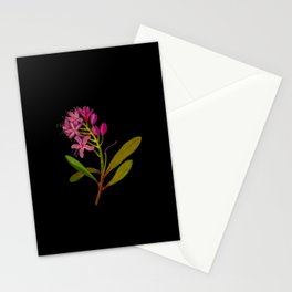 Rhododendron Ponticum Mary Delany British Botanical Floral Art Paper Flowers Black Background Stationery Cards