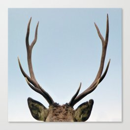 Stag antlers Canvas Print