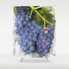 Concord grape Shower Curtain