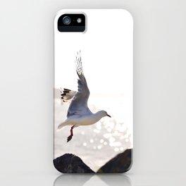 Seagull takes flight over Dunedin's MacAndrew Bay iPhone Case