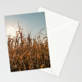 Corn field at sunset in the countryside of Lomellina Stationery Cards