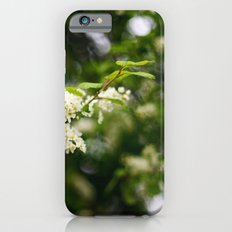 spring blossoms iPhone 6s Slim Case
