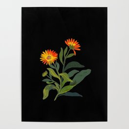 Calendula Officinalis Mary Delany Floral Paper Collage Delicate Vintage Flowers Poster