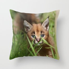 caracal kitten Throw Pillow
