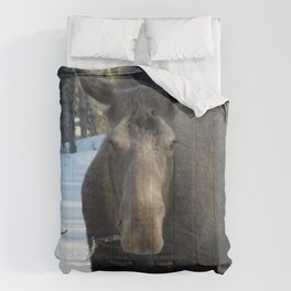 Moose Munching Poplar Lunch Comforters