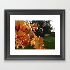 Autumn Grape Leafs Framed Art Print