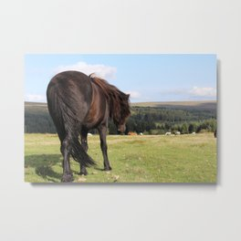 Wild Dartmoor Pony Metal Print