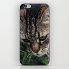Outgoing cat 085 iPhone & iPod Skin
