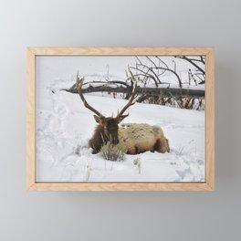 Sleeping elk in Yellowstone National Park Framed Mini Art Print