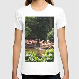 A Group of Flamingos (35mm) T-shirt