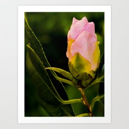 camellia III Art Print